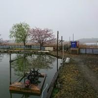 小川釣り堀園に行ってきた。2017年4月同好会