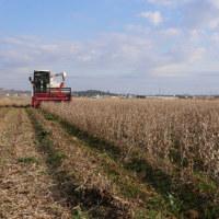 大豆の収穫が始まってます。