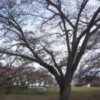 三神峯公園