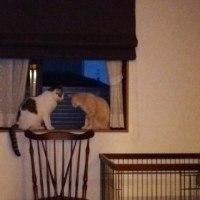 いつもシンクロ寝するラブマロの不思議