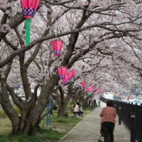 日本の春は桜だね