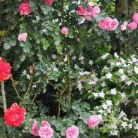 45本の薔薇