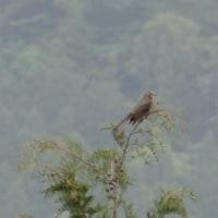 野鳥の鳴き声が多彩になってきた