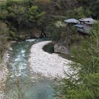 阿智川沿いの芽吹き