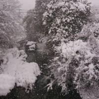 2017年1月 ようやく本格的な雪でしたね