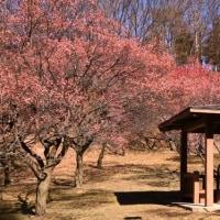 敷島総合公園