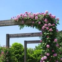 Gifu / Hana Festa ( 6 ) ( 花フェスタ)