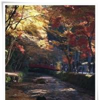 小国神社の紅葉