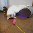 猫のランチョンマット