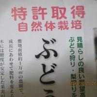 でかっ!!これ梨なんですよ・・・・・(思わず笑顔になりませんか?)
