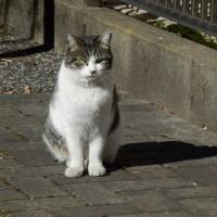 ネコの日向ぼっこ、ネコ除けかネコ招きか?