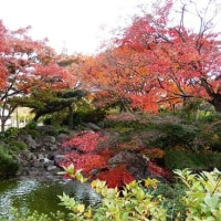 大仙公園・日本庭園