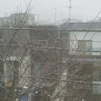 吹雪いています