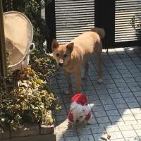 2匹の犬 大と小