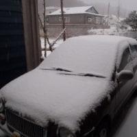 遂に雪が・・・
