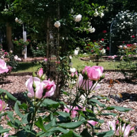 ふれあいの森の薔薇園