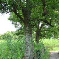 桜草公園の散歩
