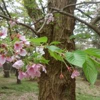 散り桜、葉桜の宴
