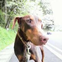 Hokuto passed away.