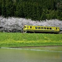 春爛漫いすみ鉄道2017