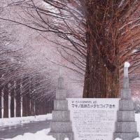 雪化粧のメタセコイヤ並木道