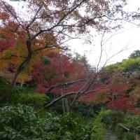 根津美術館・・・・庭園の紅葉(東京・南青山)