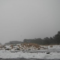 2月14日(火)のえびの高原