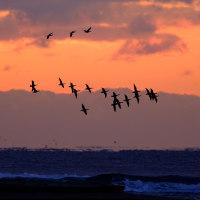 海上を群れが飛ぶ