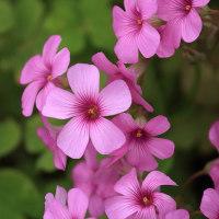 この時期の花々