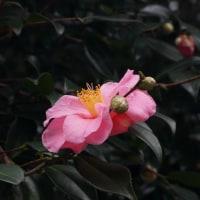 冬の植物園5(ヨシ)