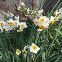 立春とは暦の上で まだまだ寒いです