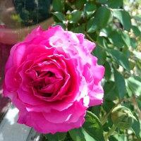Roses season has come !!