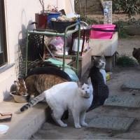 飼い主さんの居なくなった猫達