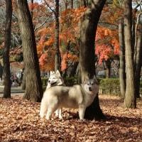 紅葉写真@府中の森公園