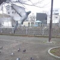 「犬猫鳩鯉ギャラリー(仮題)」