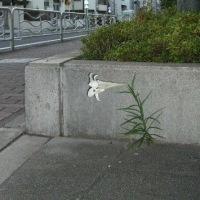 アスファルトに咲く花のように...