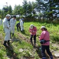 ゲレンデの花々保護、外来種除去に向けての勉強会