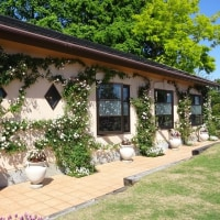 柳が崎湖畔公園庭園(イングリッシュガーデン)のバラを見に行く!