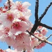 デジブック 『桜・公園』
