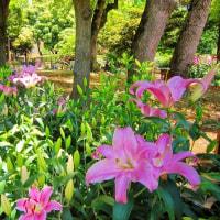 緑化よこはまフェア (*´▽`*) 花散策🎶