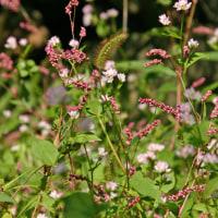野の花たち