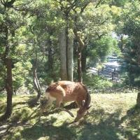 奈良ホテル・・・奈良の旅2017