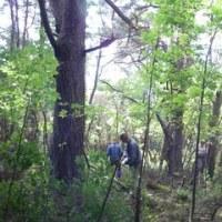 木うその森での伐採作業は無事終了いたしました。