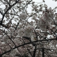 春が来た。