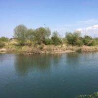 山菜採りに野洲川へ潜入