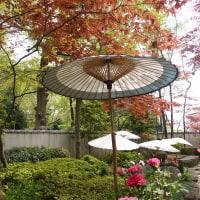 上野東照宮【ぼたん苑】で春満喫!