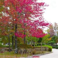 米子市湊山公園の紅葉