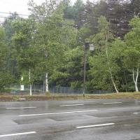 久々の雨です