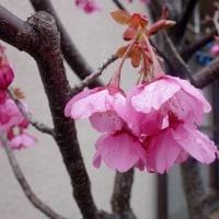 3月27日(月) 雨のち晴れ