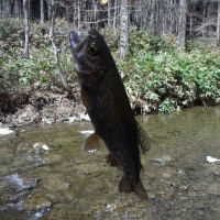 5月4日 やっと釣りができた。  21